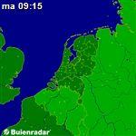 Actuele radarbeelden van buienradar.nl Grinch, Hydrangea, Hydrangea Tree, Hydrangea Macrophylla