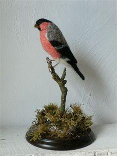 Bullfinch - Eve O'Neill  - Fforestfelt - Gallery