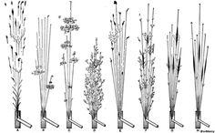 Spark testing - Wikipedia, the free encyclopedia Forging Tools, Blacksmith Tools, Steel Sculpture, Sculpture Art, Knife Filework, Diy Forge, Metal Crafts, Knife Making, Blacksmithing