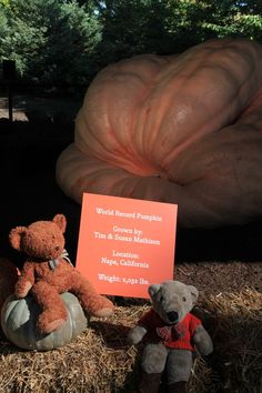 While we were doing a photo session at the Bronx Botanical Garden recently, TA told Wally that he found the pumpkin he wanted to buy for Halloween, but Wally said not only was it not for sale, it was too large to carry home on the subway.