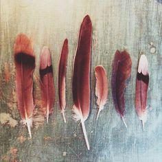 Beautiful weathered feathers