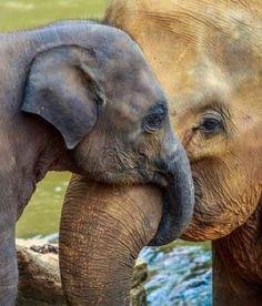 """somanyelephants: """"#somanyelephants"""""""