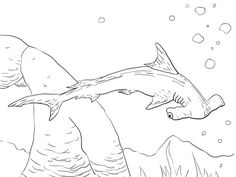 sixgill shark coloring page | education.com | sharks | pinterest ... - Coloring Pages Sharks Printable
