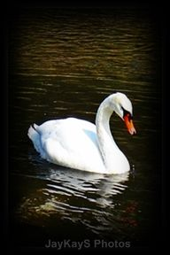"""jane segerstrom style strategy book #type4 = """"swan."""" http://onewomansphilosophy.blogspot.com/2011/09/four-tones-as-birds.html onewomanphilosophy says taylore b sinclaire has her tone IV = """"swan."""" (corresponds to winter/ #type4)"""