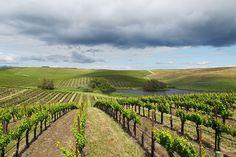 best private wine tours in Sonoma, California