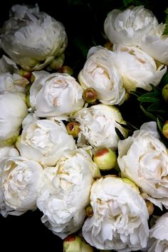 I believe these are peonies, but they could be english tea roses... they are beautiful whatever they are.