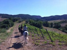 Horseback riding through vineyards and olive groves in Tuscany