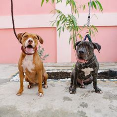 Oli & Toro.
