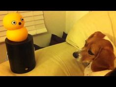 Dog reaction to My Keepon Toy