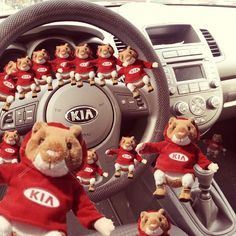 Visit Jerry Seiner Kia South Jordan to select your next vehicle from our vast selection of new Kia cars, vans, hatchback, and sport utilities models. Gerbil, Hamsters, Car Brands Logos, South Jordan, Kia Soul, Best Commercials, Newest Jordans, Back Seat, Used Cars