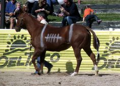 horse and rider costume ideas | Third place and the yellow ribbon went to the Box of Chocolates entry,