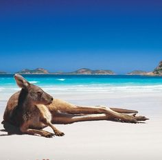 I wish I was this kangaroo right about now Lol