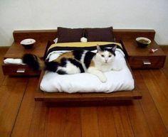Дизайн для котов