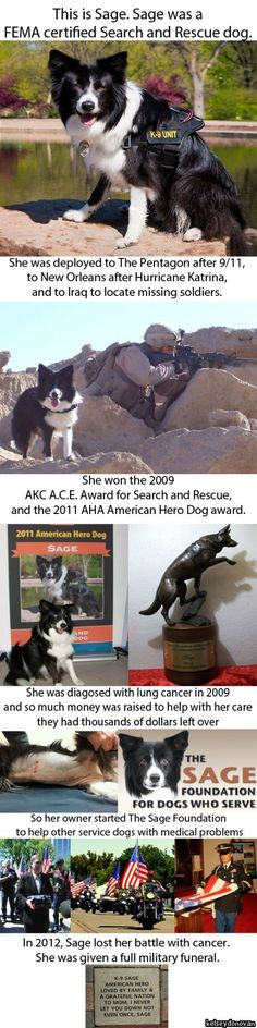 Hero Dog. Rest in peace sweet Sage. Thank you for your service.