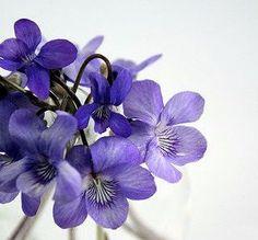 Monthly Medicine: FRIENDLINESSfor SPRING Bespoke Rituals forAPRIL - Violet leaves  - Pink roses   - Nettles