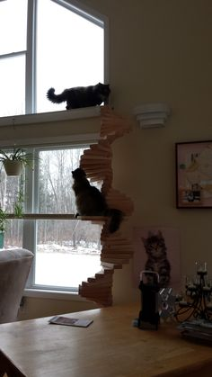 Spiral staircase for cats to access window sill walkway.