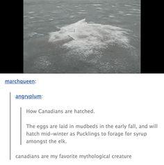 canada funny tumblr born