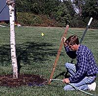 PM's Guide to Planting Mature Trees