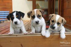 Související obrázek Labrador Retriever, Dogs, Animals, Labrador Retrievers, Animales, Animaux, Pet Dogs, Doggies, Animal