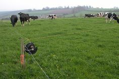 Farmers Green Tip: Did you know that rotational grazing is recommended to keep your animals healthy?   Image by Philip Halling