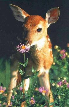Fawn...flower. Tenderness