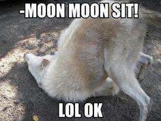 Oh Moon Moon -=