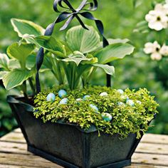 Plant an Easter Basket | Golden club moss grows flat and covers the soil like a shimmering chartreuse blanket underneath the leafy hostas. This shade-loving mix provides a medley of foliage from spring till summer. | SouthernLiving.com