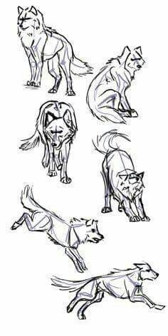 Wolf Positions