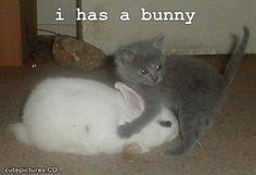 has a bunny