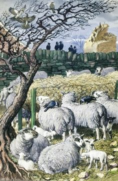 "Sheep and lambs in enclosure. (from vintage English ""Ladybird"" storybooks)"