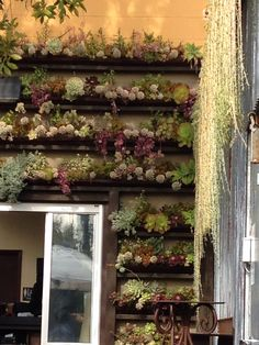 Wall of succulents planted in rain gutters. Oceanside, CA Stone Kitchen. Beautiful!