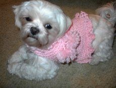 Giget's Ruffled Doggie Sweater: free #crochet #pattern
