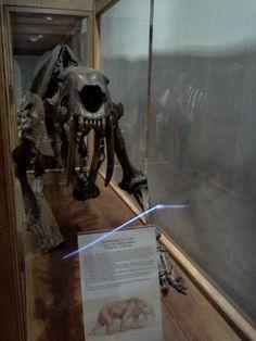 """Scatto realizzato nell'ambito della lezione """"La comunicazione scientifica al Museo di Geologia e Paleontologia"""" tenuta al museo il 5 luglio 2013"""