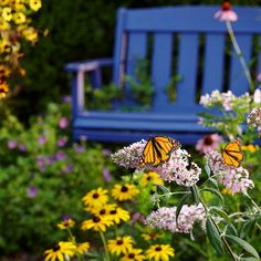 Attract beautiful butterflies to your garden by growing the right flowers.