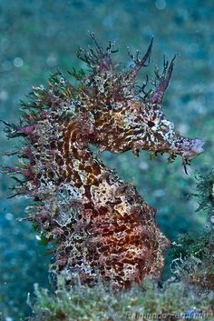 beautiful and exotic seahorse #scuba it's amazing down there