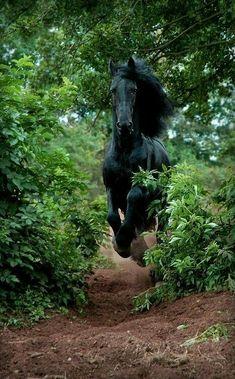 MINE! MINE! I LOVE BLACK HORSES AND HE IS SOO BIG