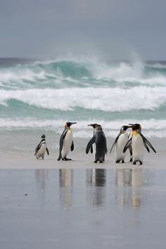 penguins by the sea