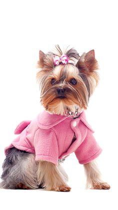 cute coats for women Long Winter Coats, Cute Coats, Stylish Outfits, Coats For Women, Teddy Bear, Animals, Ideas, Dapper Clothing, Animales