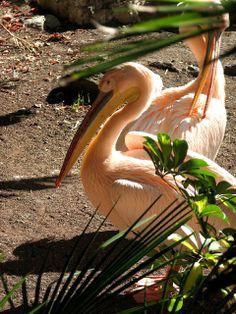 . Photograph, Bird, Photo And Video, Animals, Photography, Animales, Animaux, Birds, Photographs