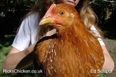 Spare the Oven Glove and Spoil the Hen | RicksChicken.co.uk