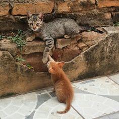 Amor dividido em 2 💕