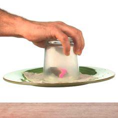 Stuck Like Glue - Air Pressure Trick at Steve Spangler Science