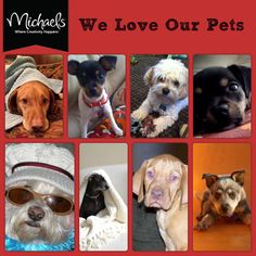 We Love Our #Pets Day #dog