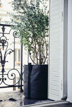 Pflanzen Gegen Muecken Hausmittel Eukalyptus Baum Klein Balkon
