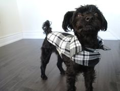 Green Contrast Color, White Plaid, Black And White, Top Stitching, Black Blazers, Collars, Studio, Dogs, Shop