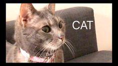 SKORPAN THE CAT