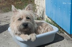 Antoine Courjon via Flickr: Cairn: Mom, I really don't think this is a pool.