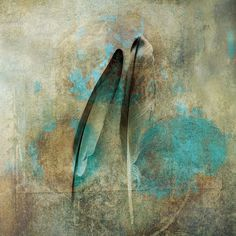 Two feathers. by Elena Ray antaratma.photoshelter.com