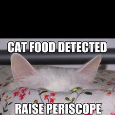 Daily lol cats