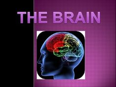 This is a 104 slide Power Point on The Brain  It is a combination of resources that I found on the Internet to create this slide show.  Some items may be copyrighted but my intent was not to infringe on someone else's work.  I use this combination of material for my IB Psychology class.
